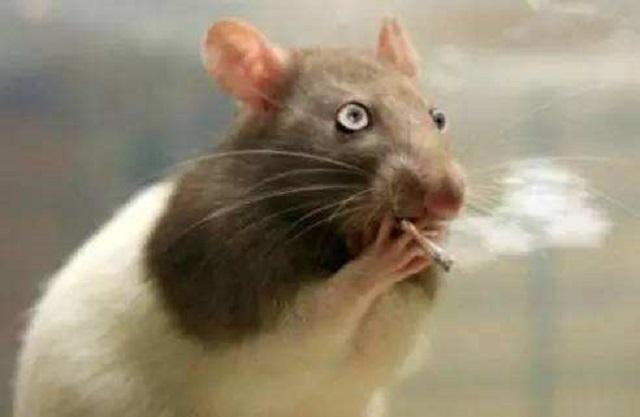 代理家用净水器切记鼠目寸光